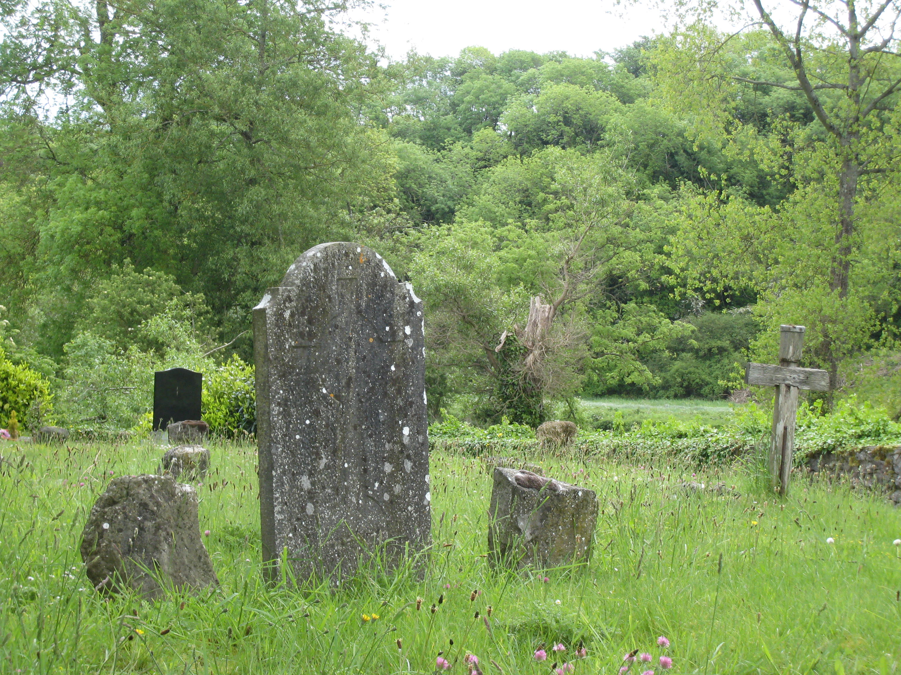 Photo of old headstones in wildgrass