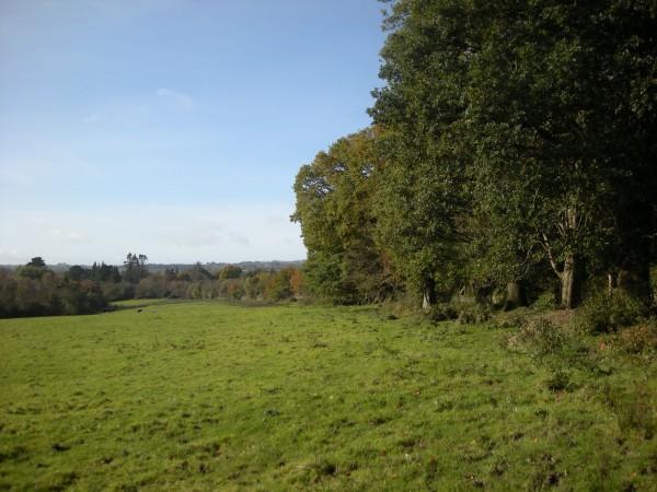 Castlecomer Woodlands COS