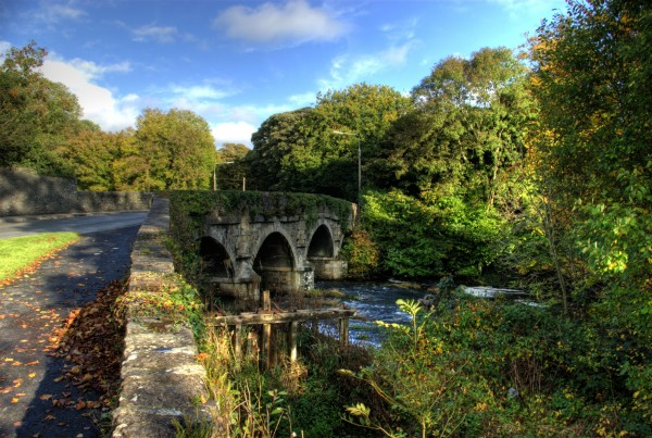 bridge castlecomer - trees COS