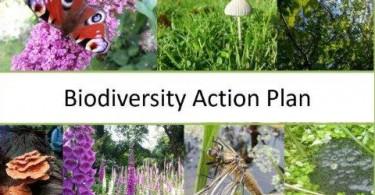 feature image biodiversity