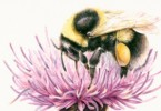 Bee pic 1