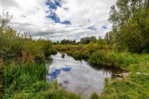 Newpark Marsh (credit Dylan Vaughan)